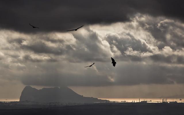 Buitres y Gibraltar