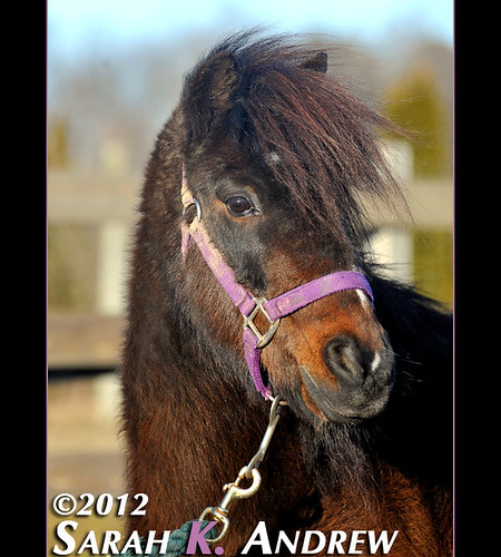 Cocoa- available for adoption at Horse Rescue United