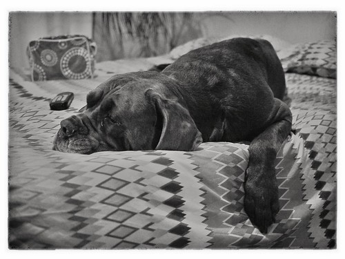 Let sleeping dogs lie by BagRat