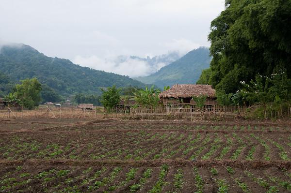 paisatge del nord de l'India