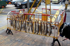 Construction Barrier Fish Vendor