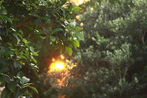 sun among leaves by Rossella Sferlazzo