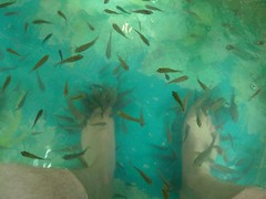 Fish pedicure, Siem Reap Cambodia
