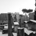 Torre Argentina - Rome under the snow