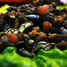 Percebes Pazo_doval-69