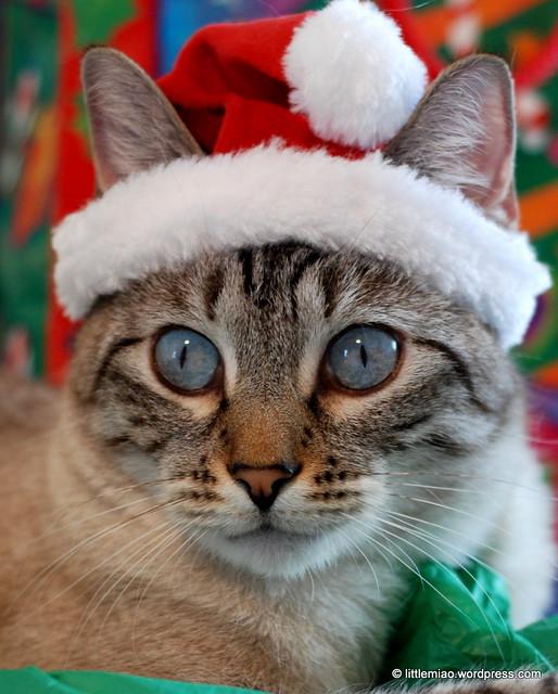 choopurr 12-18-2011 12-28-29 PM