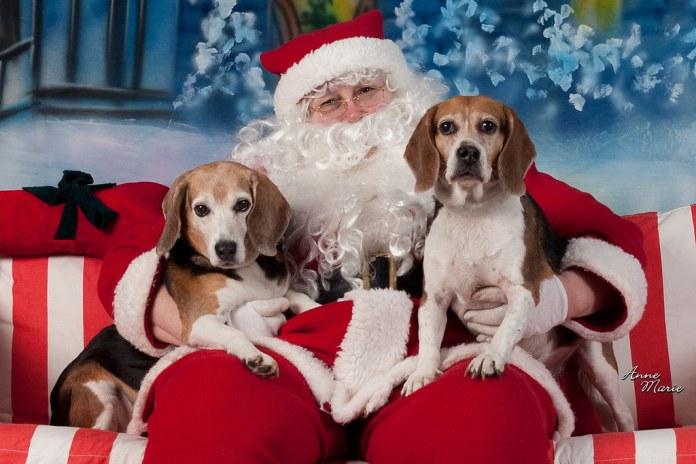 Pet Photos with Santa on Saturday, November 19
