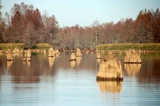 Low Falls Lake Stumps
