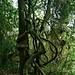 Tarzan vines + almond tree = Tru luv 4ever