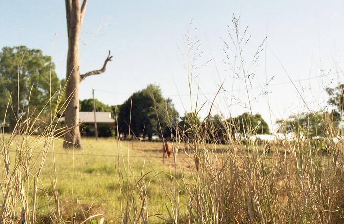 pastoral idyll