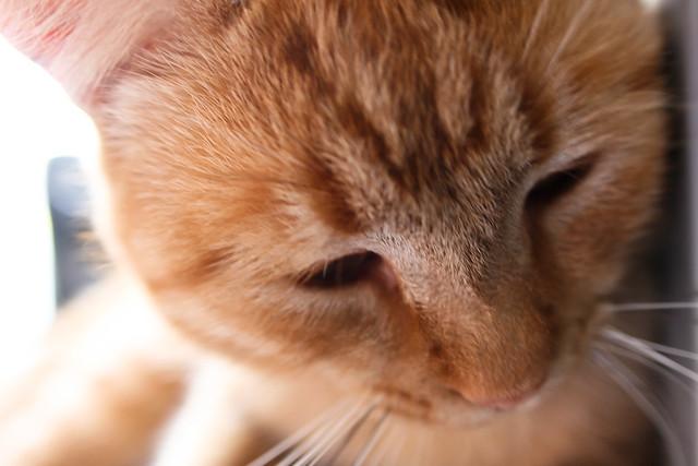 Kitty Eyelashes