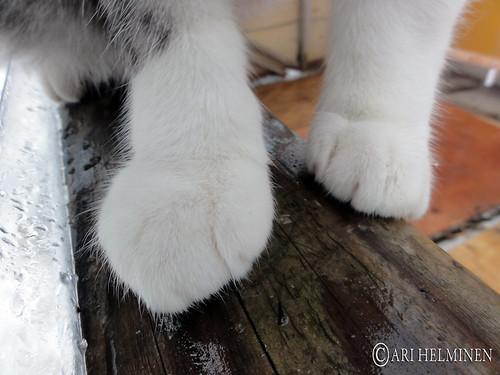 弘前 青森 Cute cat in Aomori