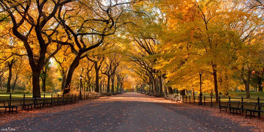3d Fall Wallpaper The Mall Central Park This Shot Comes From Quot The Mall