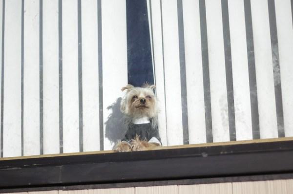 Dog priest