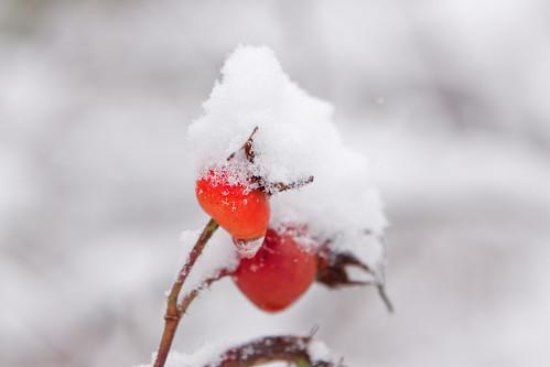 Snow2012-41