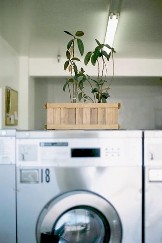 Laundromat plant 2