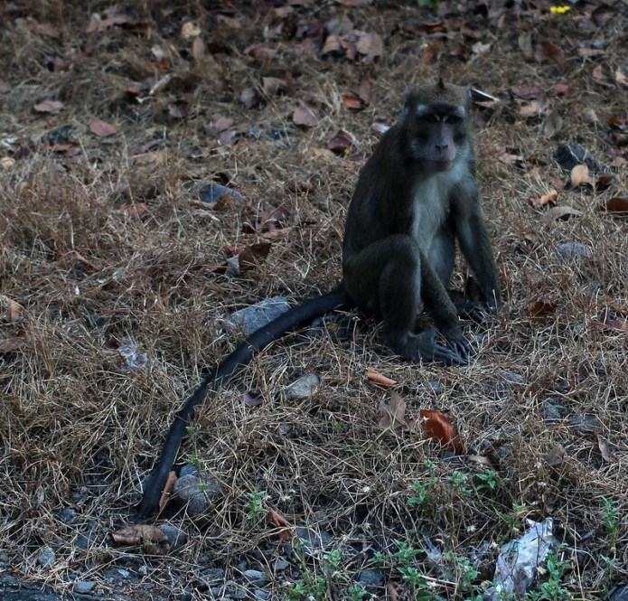 monkeys on the side of the road 13