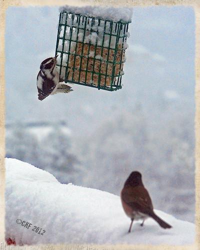 A Bird's Hope
