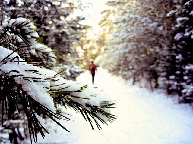 Winter - Invierno  {explored}