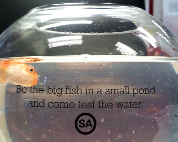 Advantage SA, why you no see this coming when you MAILED out the goldfish? (Image via mUmBRELLA)