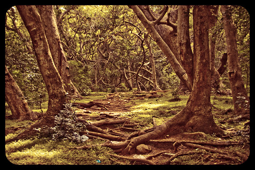 The unexplored jungle  by Varnajaalam @ Rajanna