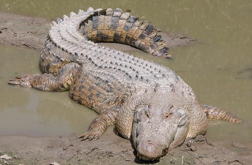 【龍神話】龍的傳說與生物多樣性   臺灣環境資訊協會-環境資訊中心