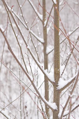 Snow2012-48