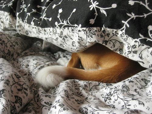 4 June 2011: Do not disturb