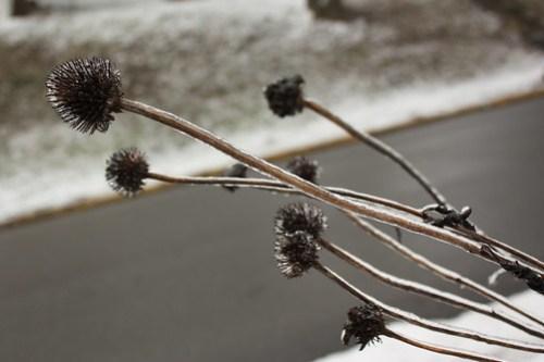 20120121_Ice_Day_018