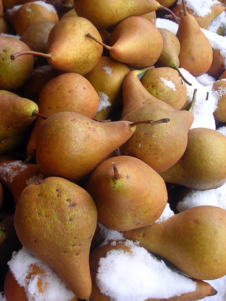 Bosc pears -- closeup