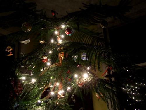 solstice tree 1
