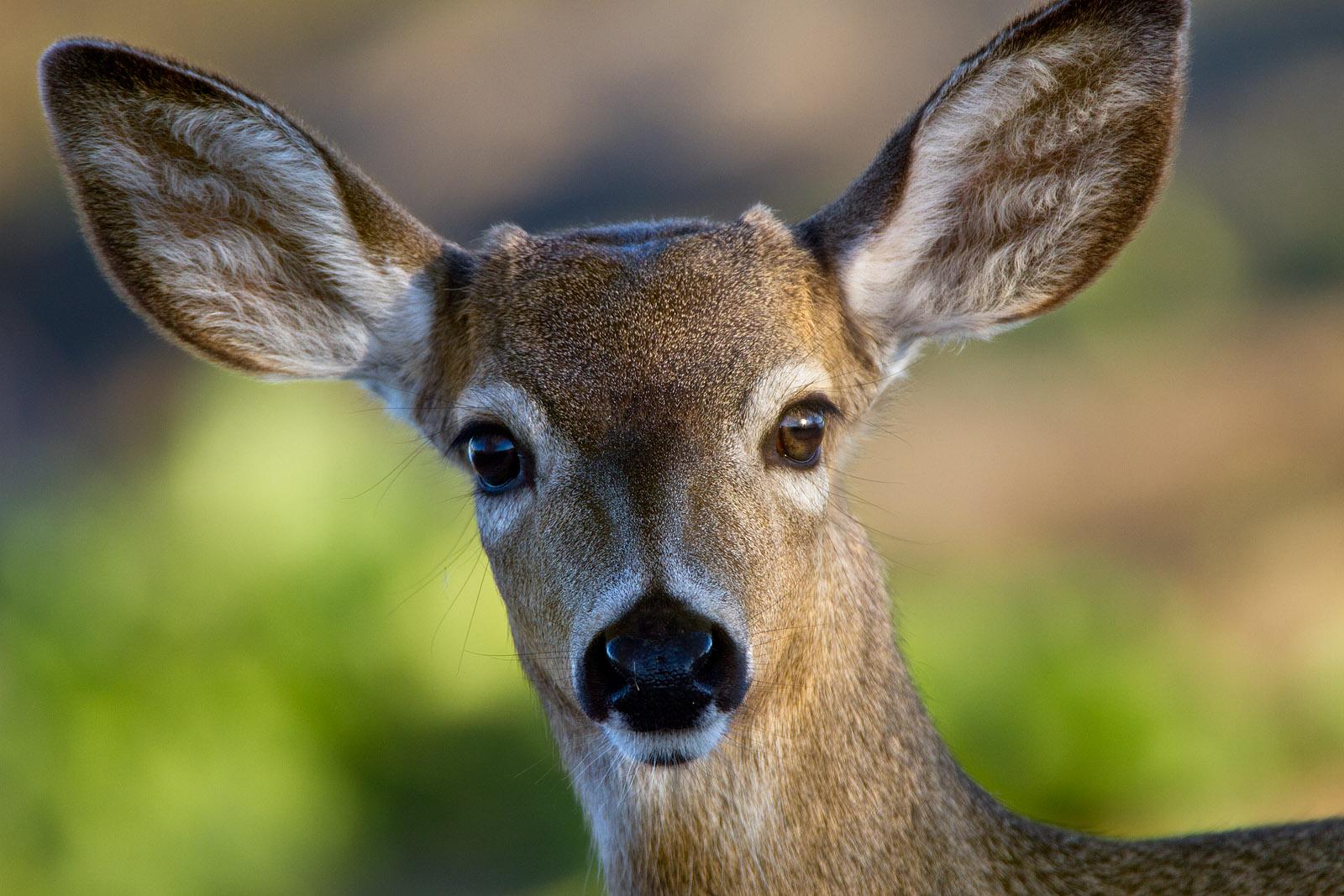 Deer Face Worksheet