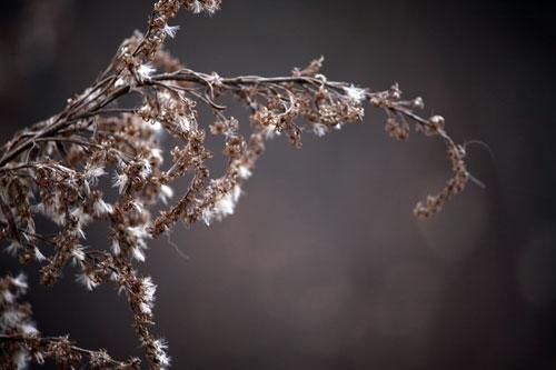 Meadowlark Botanical Gardens flowering plant