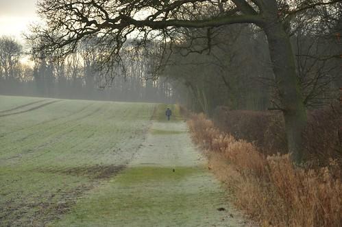 The walker by timabbott
