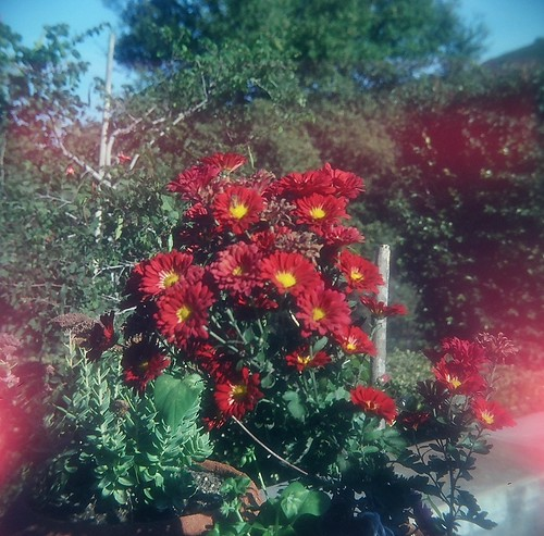 unfocused flowers