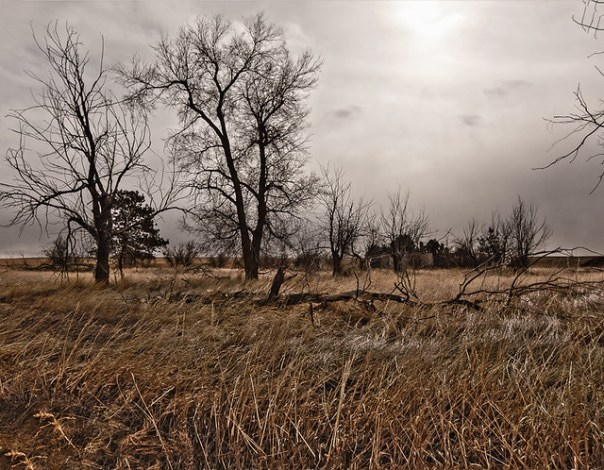 Great gloomy plains