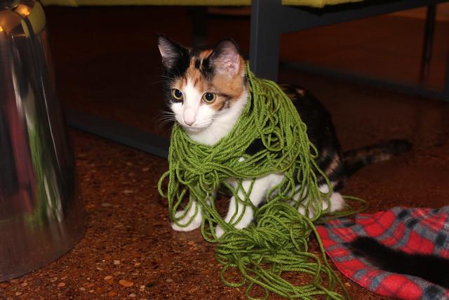 yarn babies
