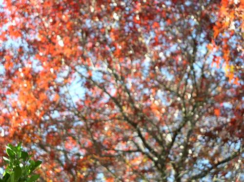 Seasonal Blindness by Jason A. Samfield