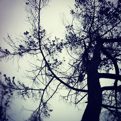 Arbutus Tree Spiral