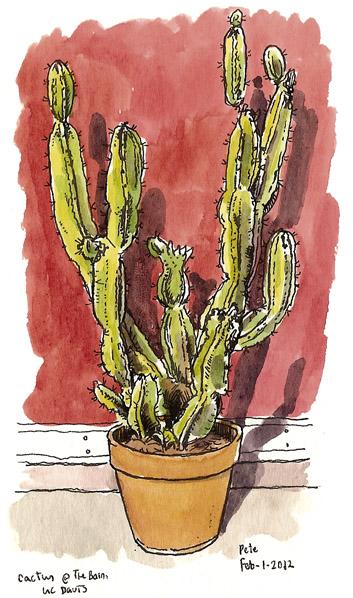 cactus at the barn, uc davis