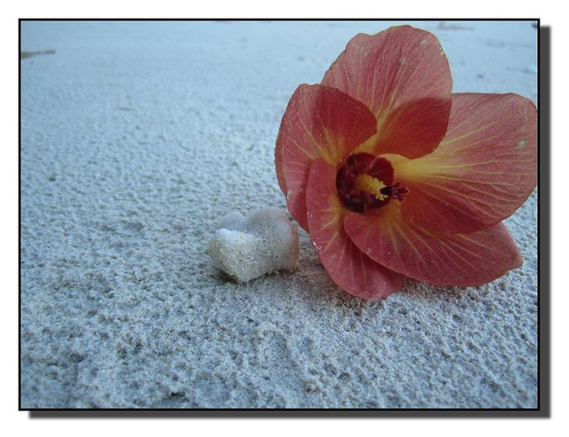 Blossoms in the sand