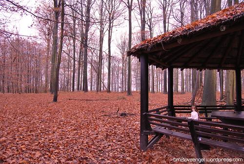 Buggenhout Forest