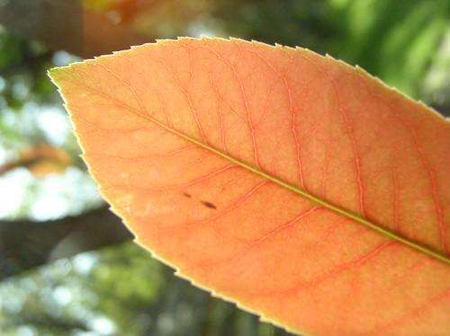 Autumnish by Jason A. Samfield