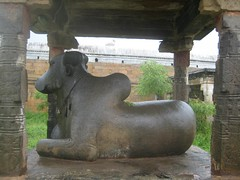 Nandhi in font of Kailasanathar shrine 2