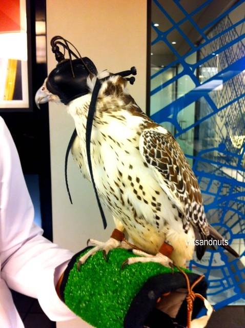 Falcon # UAE40