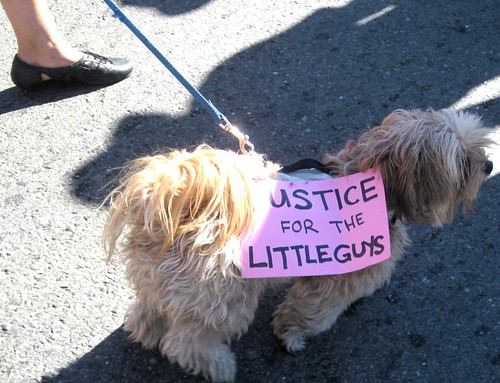 Canine Justice by dyannaanfang