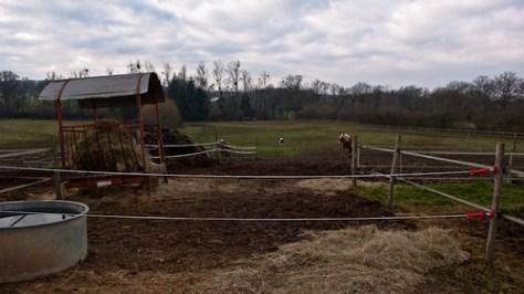 Hay and paddock