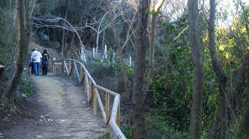 Camino de la Teja