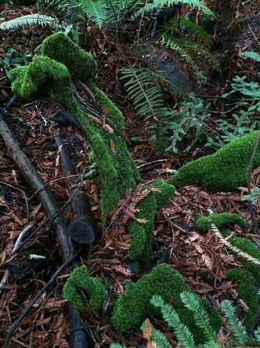 Green moss ferns