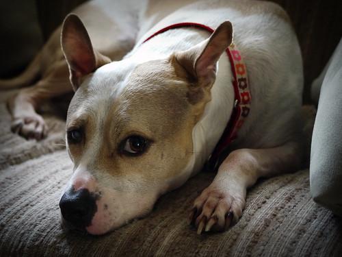 Leela's New Collar